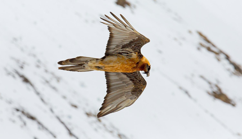 Dziwny Ptak Aktualne Wydarzenia Z Kraju I Zagranicy Wyborcza Pl