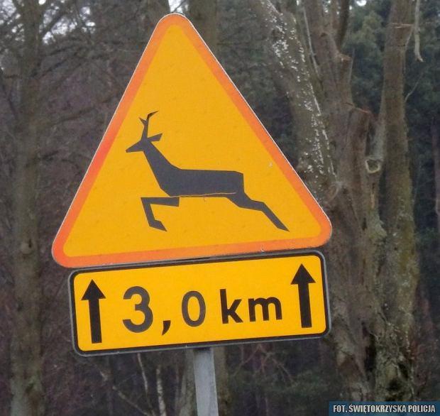 Znak A-18b, ostrzegający o dzikiej zwierzynie