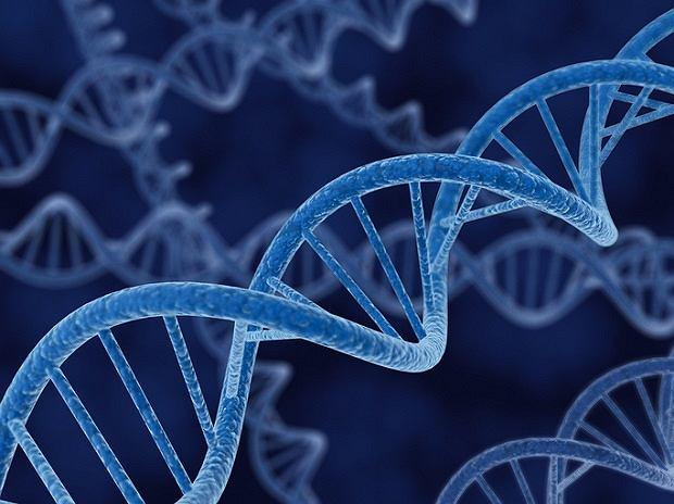Zespół Blooma - bardzo rzadka choroba genetyczna. Przyczyny, objawy i leczenie zespołu Blooma