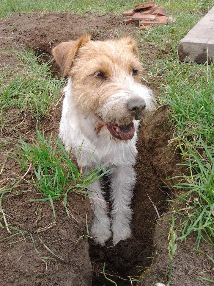 Małe Duże Rasowe I Kundelki Wasze Psy Na Międzynarodowy Dzień Psa