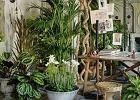 Wyeksponuj zieleń i kwiaty w twoim domu, przy pomocy oryginalnych wazonów i donic