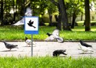 Trzy z nich maj� chroni� ptaki (g��wnie kaczki) i je�e. - Zdj�cia