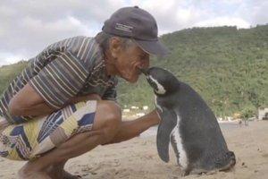 Ocalił umierającego pingwina. Wdzięczny ptak przepływa ponad 9000 kilometrów rocznie, aby odwiedzić swojego przyjaciela