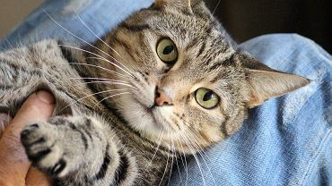 Koty pochłaniają szkodliwe toksyny, co oznacza, że kosztem własnego zdrowia dbają o nasze