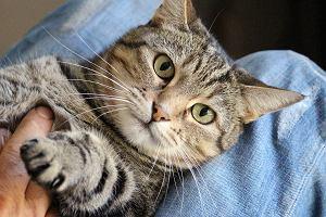 Naukowcy: koty pochłaniają toksyczne chemikalia, które gromadzą się w domowym kurzu i szkodzą ludziom