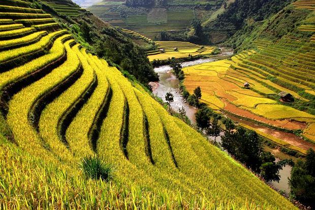 Tarasy ryżowe. Kambodża, Siem Reap / fot. Shutterstock