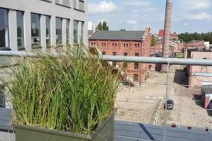 Biurowiec Forum 76 z zielonym dachem