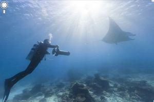 Mo�esz zanurkowa� na rafie koralowej z Google Street View