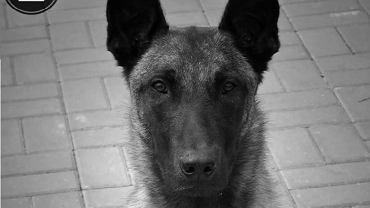 Policjanci żegnają psa Cziko