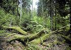Dziwne czasy, ludzie boją się lasu! Gdy mają się odbyć leśne zajęcia, niektórzy rodzice nie posyłają dzieci do szkoły