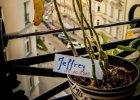 Paprotka na kontuarze. O roślinności społecznej i schronisku dla niechcianych roślin