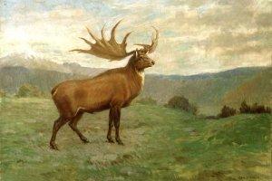 Najwi�ksze i najdziwniejsze - wymar�e ssaki