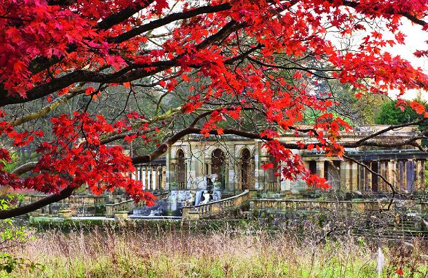 dHEVER CASTLE  KENT: AUTUMN: AUTUMN COLOUR OF RED MAPLE ON SIXTEEN ACRE ISLAND WITH THE LOGGIA BEHIND
