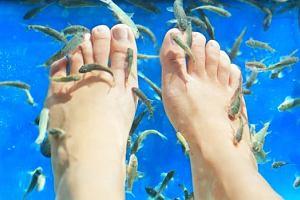 Sanepid ostrzega - modne zabiegi z u�yciem rybek Garra rufa mog� by� gro�ne dla zdrowia