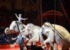 Wroc�aw zakazuje wjazdu cyrkom ze zwierz�tami. Lublin zrobi to samo? Nie wiadomo - bo PiS