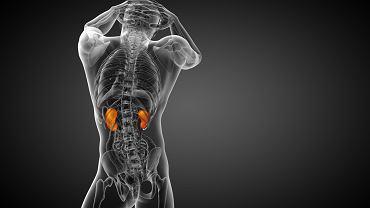 Glomerulopatia lipoproteinowa to niezwykle rzadko rozpoznawana specyficzna choroba nerek.
