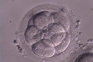Sklonowano ludzkie zarodki. Nadzieja na prze�om w walce z chorobami
