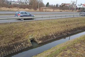 Przecinający Gumieńce dopływ Odry to ściek. Inspektorzy ochrony środowiska domagają się reakcji