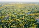 Orange ma sto hektar�w lasu pod Warszaw�. Trafi�y na sprzeda�