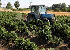 """PiS funduje rolnikom trz�sienie ziemi. """"Chaos, biurokracja, ograniczenie swob�d"""""""