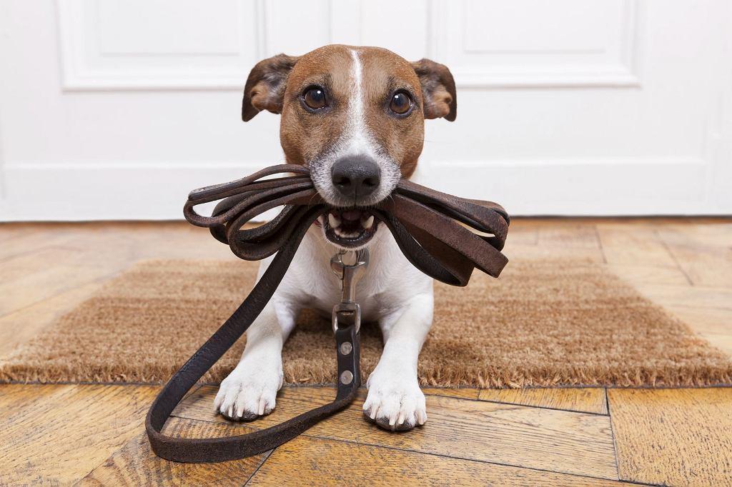 Psy są bardziej przewidywalne niż koty i łatwiej je zmotywować (fot. Dame Desso / iStockphoto.com)