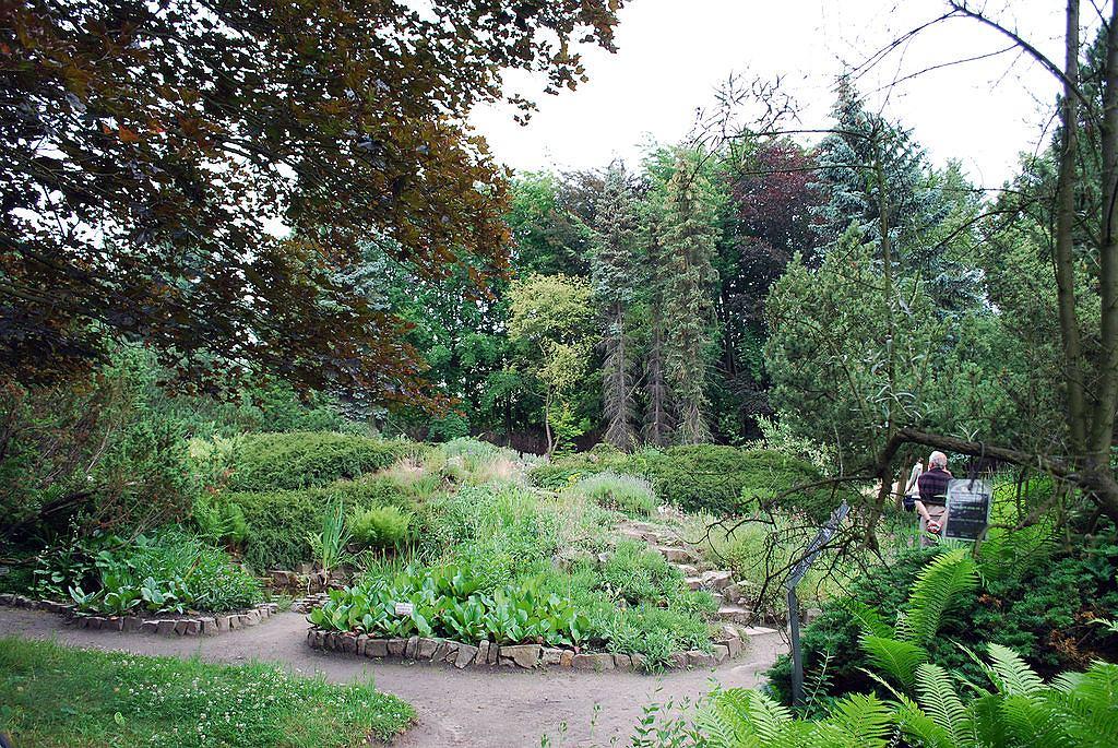 Alpinarium Arboretum w Rogowie / fot. Polimerek, Wikimedia Commons