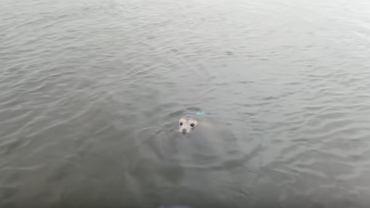 �apali ryby w Wi�le. A� tu nagle z wody wynurzy� si� ten zwierzak