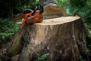 Firma z Wielkopolski na liście kupujących drewno z Puszczy Białowieskiej