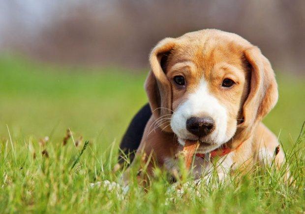Psy doskonale nas rozumieją, bo żyją z nami od tysięcy lat