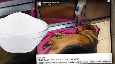 Ksylitol, nawet w niewielkich ilościach, jest śmiertelnie niebezpieczny dla psów