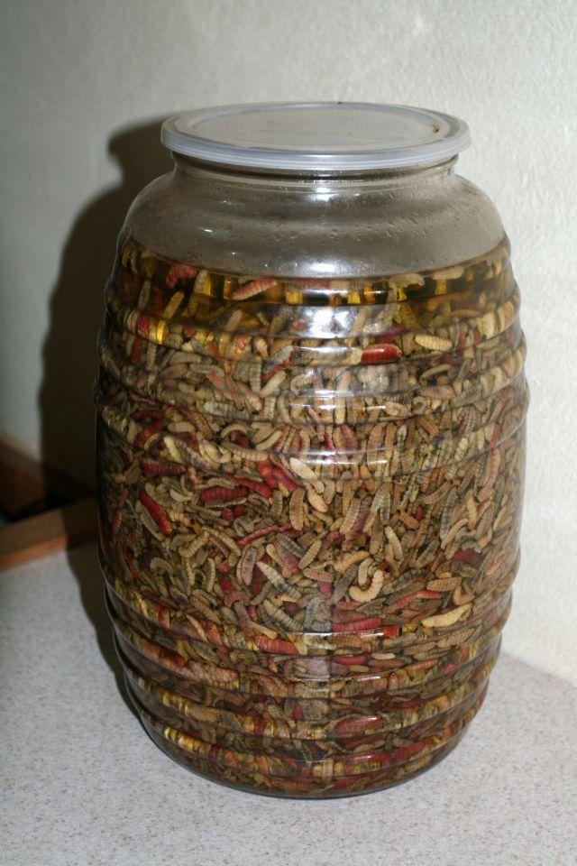 Alkohole świata. Słój z gusanos de maguey - gąsienicami żerującymi na gawie błękitnej, które wkłada się do każdej butelki mezcalu jako certyfikat autentyczności