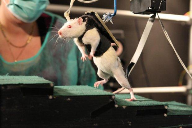 """Pos�owie pracuj� nad eksperymentami ze zwierz�tami. """"Jest szansa, �e ustawa utrzyma zapalonych naukowc�w w ryzach"""""""