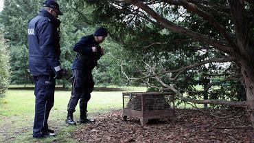 Porzucony dzik na trawniku przed gmachem Sejmu