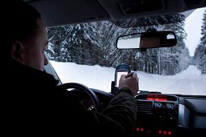 Le�nicy za�o�yli drzewom nadajniki GPS. By�o mniej kradzie�y?