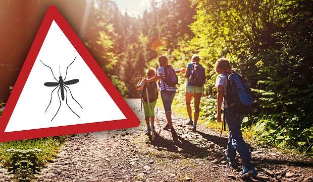 Lato to trudny okres dla osób, które są szczególnie wrażliwe na ukąszenia owadów i pajęczaków.