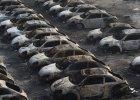 Wybuchy w Tiencin | Volkswagen straci� tysi�ce aut