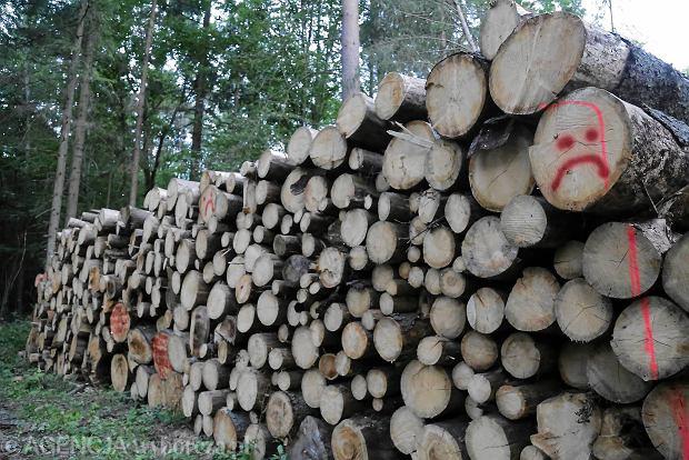 Drewno z Puszczy Białowieskiej bez europejskiego certyfikatu?