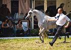 Jan�w Podlaski, aukcja koni