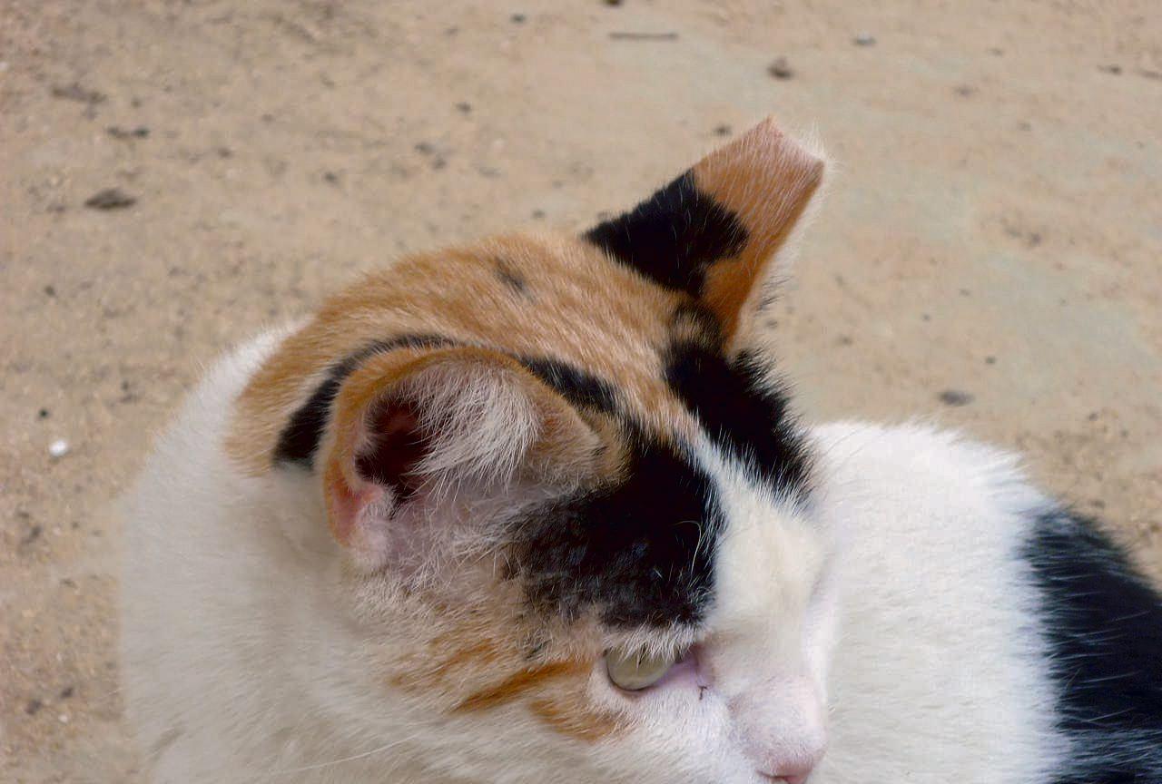 Mafia Z Tarchomina Urządza Polowania Na Koty Pułapki Kamery