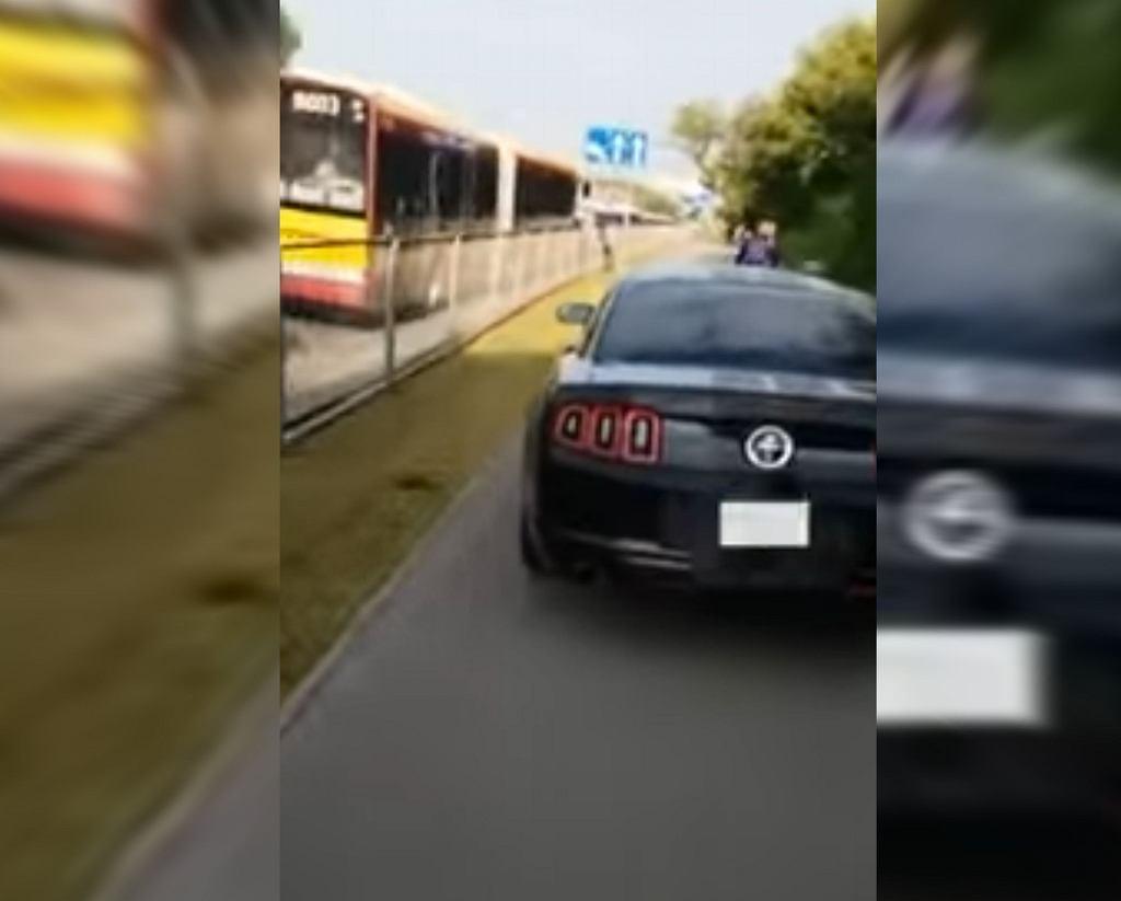 Mustang na drodze rowerowej