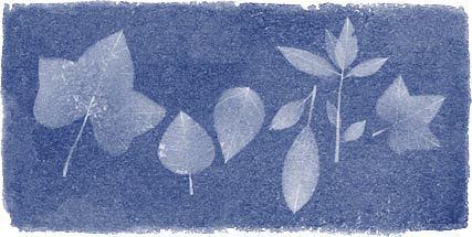 Anna Atkins uczcona przez Google