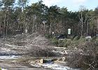 Okres lęgowy a wycinka drzew. Ministerstwo: Kwestie ptaszków i motylków to nie my [ANALIZA]