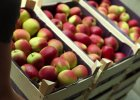 """Spadają ceny jabłek. Rolnicy: """"nawet połowę taniej, niż przed rokiem"""""""