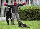 Co potrafią policyjne owczarki i labradory [WIDEO]