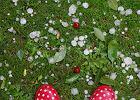 Grad wielko�ci czere�ni pada� w Warszawie [zdj�cia]