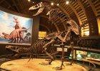 Seks w rozmiarze XXL. Jak to robi�y dinozaury?