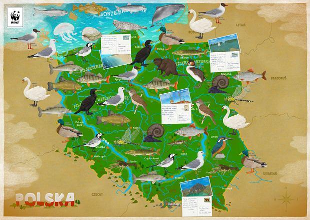 Plakat edukacyjny WWF.PL