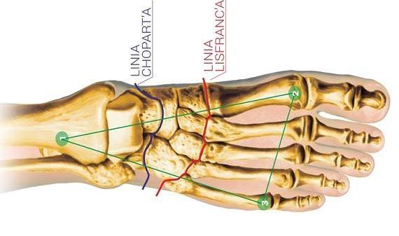 Punkty podparcia i łuki stopy