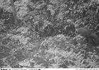 Jeden z najrzadszych ssak�w sfotografowany w Wietnamie po raz pierwszy od 15 lat