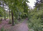 Makabryczne znalezisko w lesie pod Rybnikiem. Policja blisko rozwiązania zagadki